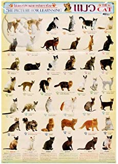 Favorite cat breeds poster dover posters dover 9780486390109