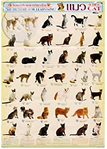 how to find species of cat