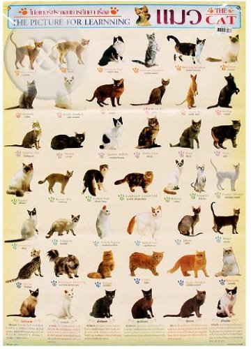 Amazon com cats of the world posters ultimate breeds cat poster