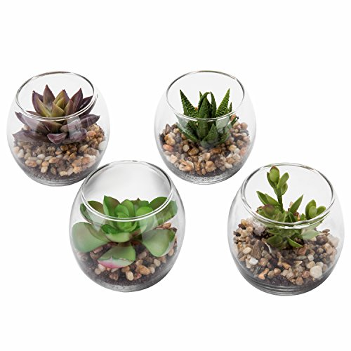 Decorative House Plants - Set of 4 Decorative Mini Modern Design Clear Round Artificial Succulent Plant Glass Display Vases (Assortment 1)