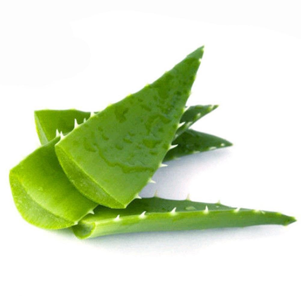 Star Eleven 100 Seed Aloe Vera Seeds Edible Succulent Plant Rare Herbal Medicinal