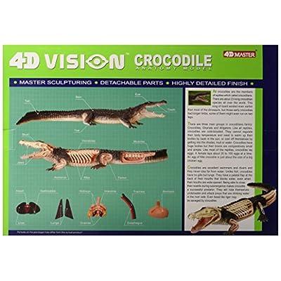 Famemaster 4D Vision Crocodile Anatomy Model: Toys & Games