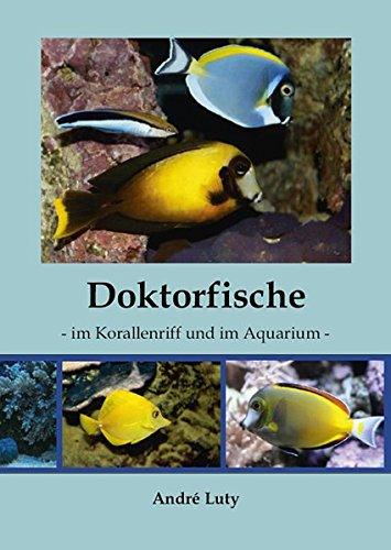 Doktorfische im Korallenriff und im Aquarium
