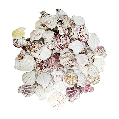 Scallop Shell Beads - Squadare 380 Grams Dyed Scallop Beach Sea Shell Beads with Holes 1.53~1.77