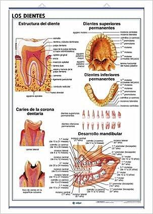 Los Sentidos la Vista /Los Dientes: Láminas de Anatomía de ...