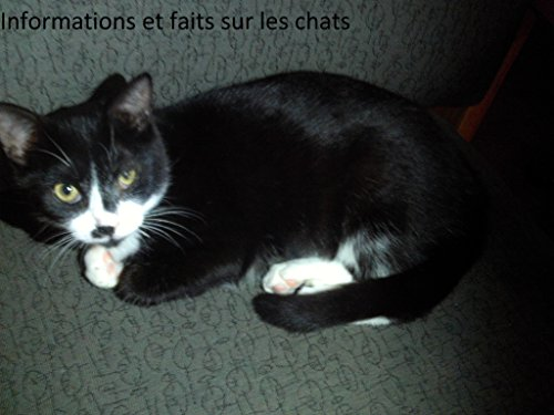 Informacion y datos sobre los gatos (Spanish Edition) - Kindle ...