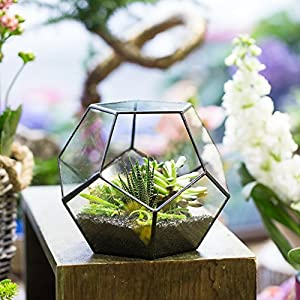 Black Glass Geometric Terrarium Container Modern Tabletop Window Sill Decor Flower Pot Balcony Planter Diy Display Box For Succulent Fern Moss Air Plants Miniature Fairy Garden Gift No Plants