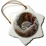 3dRose Danita Delimont - Owls - Spotted owlet, Ranthambore National Park, India - 3 inch Snowflake Porcelain Ornament (orn_276771_1)