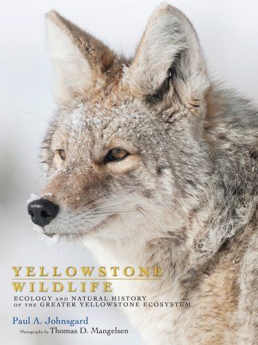 - Yellowstone Wildlife: Ecology and Natural History of the Greater Yellowstone Ecosystem