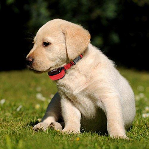 Dog Shock Collar Made In Usa