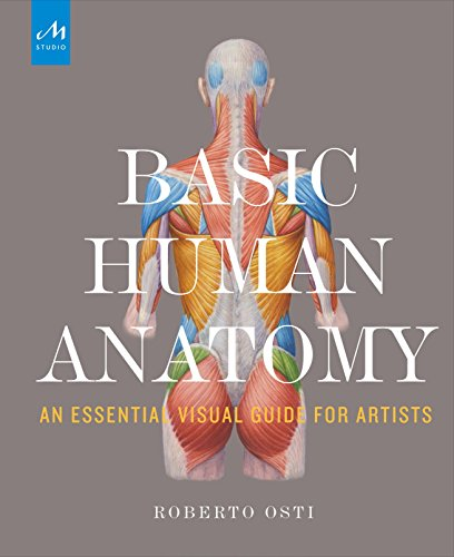 Basic Human Anatomy: An Essential Visual Guide for Artists
