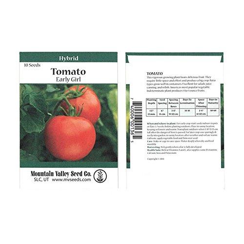 early girl tomato seeds - 9
