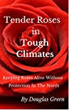 Tender Roses in Tough Climates: How To Grow Awesome Rose Garden Plants In The North