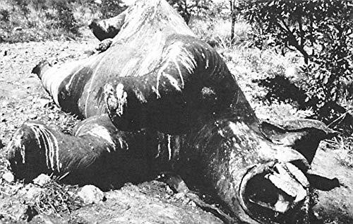 Misc Animals Ivory Trade, Elephants Washington DC, USA Unused