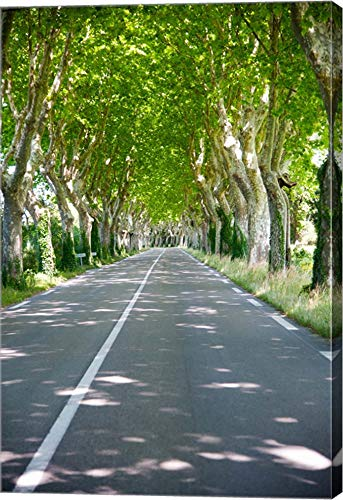 Allee of Trees, St.-Remy-De-Provence, Bouches-Du-Rhone, Provence-Alpes-Cote d'Azur, France by Panoramic Images Canvas Art Wall Picture, Gallery Wrap, 32 x 48 inches