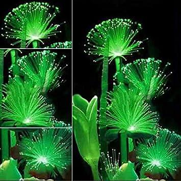 Semillas De Flores Fluorescentes Semillas De Flores Esmeralda