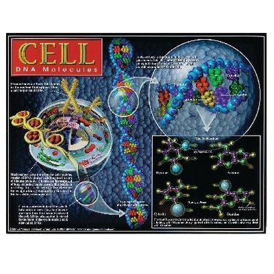 10900Tpola   Cell Poster Series Set   Cell Poster Series Set   Kit Of 1