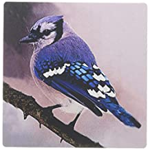 3dRose LLC 8 x 8 x 0.25 Inches Blue Jay Mouse Pad (mp_606_1)