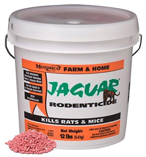 Jaguar Rodenticide Pail -