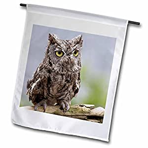 Danita Delimont - Owls - USA, Alaska, Ketchikan. Western screech owl - US02 BJA0238 - Jaynes Gallery - 12 x 18 inch Garden Flag (fl_87388_1)