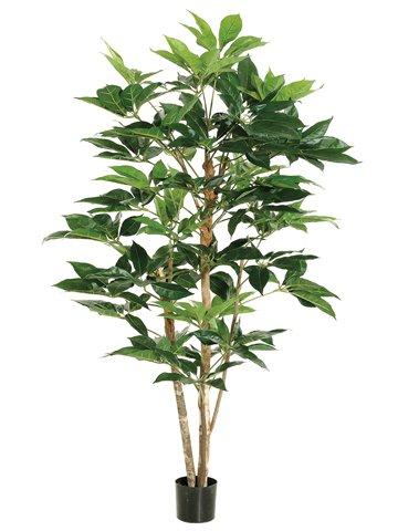 5' Schefflera Tree w/317 Leaves in Pot Green (Pack of ()