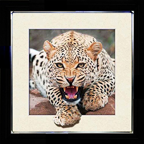 3D Enhanced Picture Frame - 5D Lenticular 3d Picture Poster Artwork Wall Decor Holographic Pics Optical Illusion Animated Image on Canvas (With Black Frame and Silver Outline) (Cat - - Eye Cat Outline