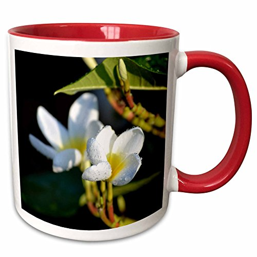 3dRose Susans Zoo Crew Photography Flowers - lei flower white yellow - 15oz Two-Tone Red Mug (mug_184433_10) (Two Tone Lei Flower)