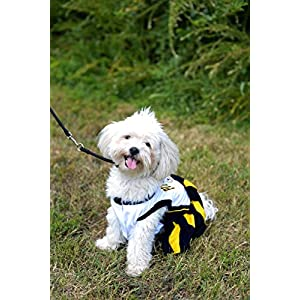 Pittsburgh Steelers NFL Cheerleader Dress For Dogs - Size Medium