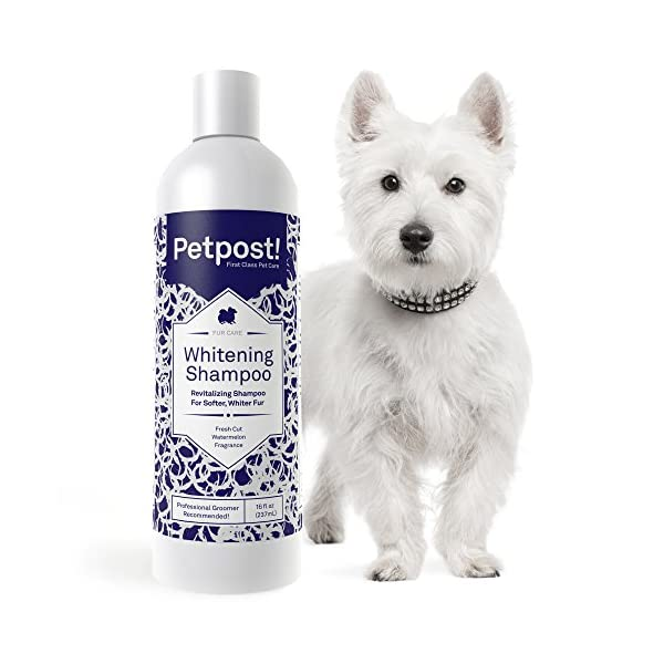 Petpost | Dog Whitening Shampoo – Best Lightening Treatment for Dogs with White Fur – Soothing Watermelon Scent… Click on image for further info.