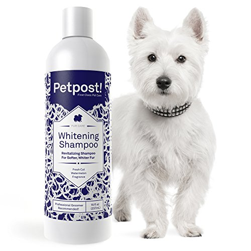 Petpost | Dog Whitening Shampoo - Best Lightening Treatment for Dogs with...