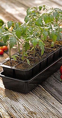 GrowEase Self Watering Seed Starter Kit, 12 Cells