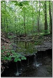 Tiny Forest Falls By Kurt Shaffer 16x24 Inch Canvas Wall Art Prints Posters Prints Amazon Com