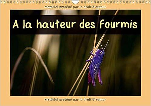 A Hauteur Des Fourmis 2018: Calendrier Mensuel, 14 Pages Avec Des Macrophotographies D'insectes Des Pyrenees Orientales (Calvendo Animaux) (French Edition)