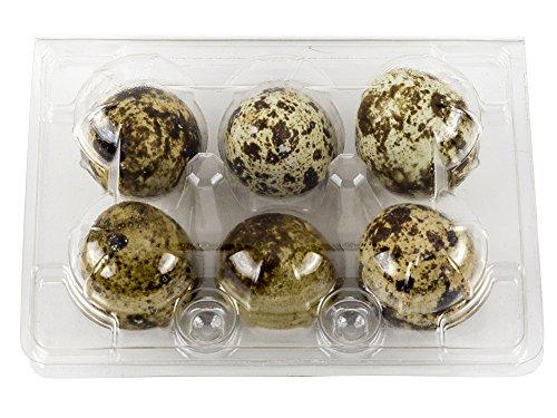 Plastic Quail Egg Carton Holds 6 Eggs Clear Tray Holds Half-Dozen Eggs (10-Pack)