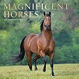 Magnificent Horses 2019 Calendar