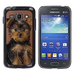 YiPhone /// Prima de resorte delgada de la cubierta del caso de Shell Armor - Yorkshire Terrier Puppy Surprised Dog - Samsung Galaxy Ace 3 GT-S7270 GT-S7275 GT-S7272