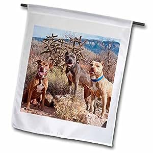 3dRose fl 93021_ 1American Pitt Bull Terrier perro Nuevo México US32ZMU0030Zandria Muench Beraldo jardín bandera, 12por 45,72cm