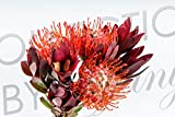Fresh Protea Bouquet for Garland, Floral Arrangement, Birthday, Anniversary & Funeral Long Lasting, Decoration for Wedding, Event, Everyday, Occasion Gift.