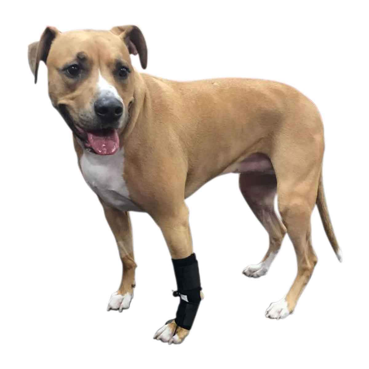 Walkin' Front No-Knuckling Training Sock Helps Dogs Pick up Their feet When knuckling Under or dragging Their Front Paws by Walkin'
