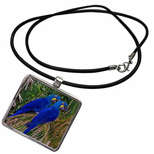 3dRose Danita Delimont - Parrot - Brazil. Hyacinth Macaws a Vulnerable Species of Parrot in The Pantanal - Necklace with Rectangle Pendant (ncl_278205_1) ()