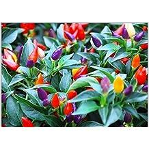 "Pepper, Chilli, 20 Seeds, ""Bolivian Rainbow"" Chili Pepper(C. Annuum) Heirloom"