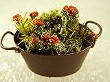 "Cheap Appalachian Emporium's ""Flower"" Pot Fairy Garden Decor w/Live British Soldier Lichen Miniature"