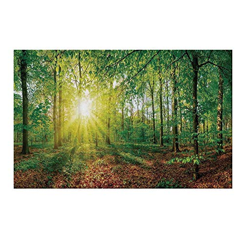 YOLIYANA Farm House Decor Durable Door Mat,Glade in The Forest at Sunset Evening Meadow Greenland Mother Earth Wildlife Picture for Home Office,19.6