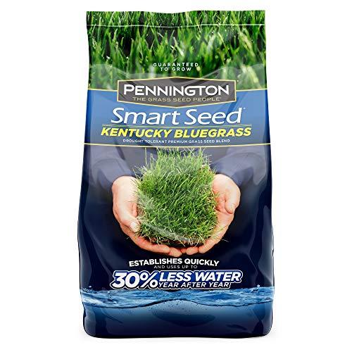 Central Garden & Pet 100086847 Smart Kentucky Bluegrass Grass Seed 3 LB