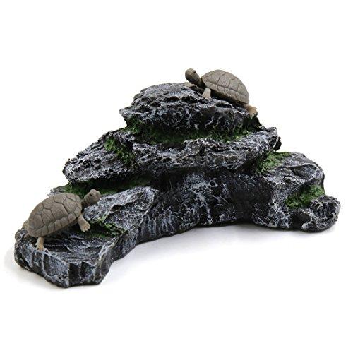 Turtles Rock - 8