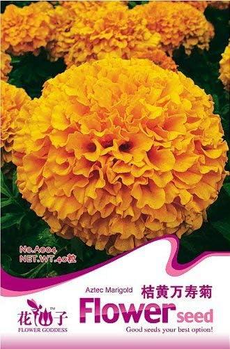 50+ seeds Flower Seeds Orange Marigold Annual Tagetes