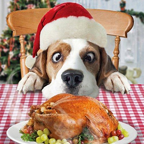 beagle dog turkey just one slice charity xmas cards pack of 5 amazoncouk kitchen home - Christmas Beagle