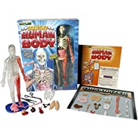 SMARTLAB: You Explore It - Human Body