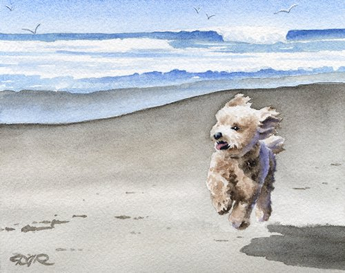 Poodle at the Beach Apricot Art Print by Artist DJ Rogers