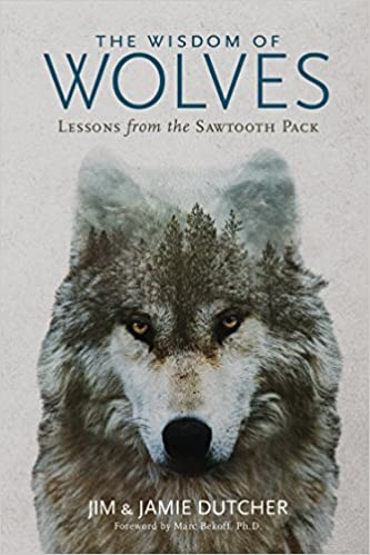 Amazon The Wisdom Of Wolves Lessons From The Sawtooth Pack
